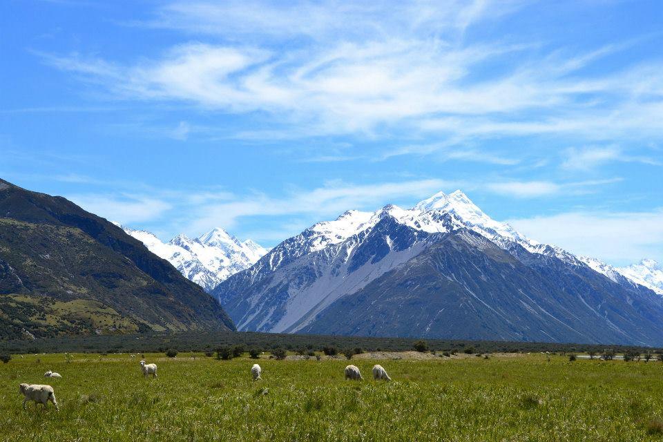 Nueva Zelanda (1)