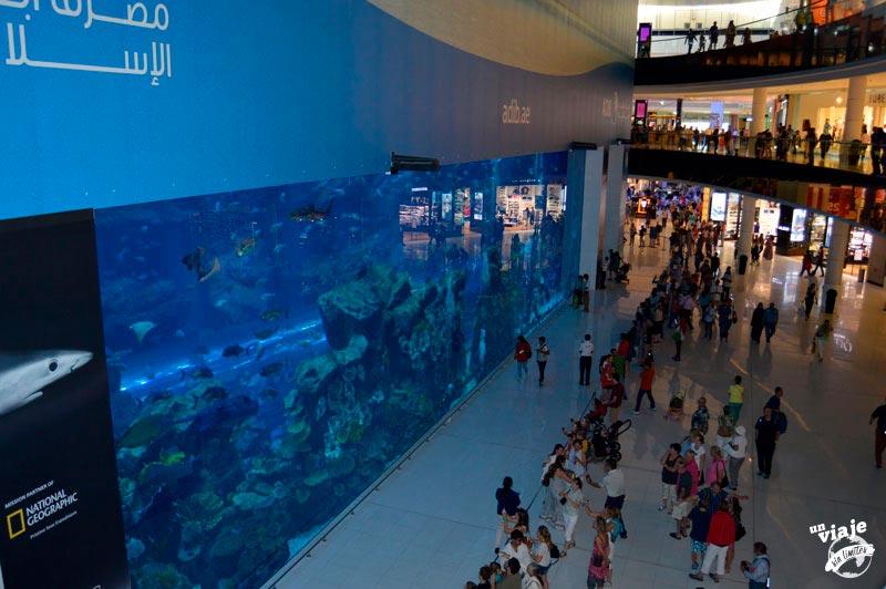 Acuario dentro del centro comercial más grande del mundo. Dubai