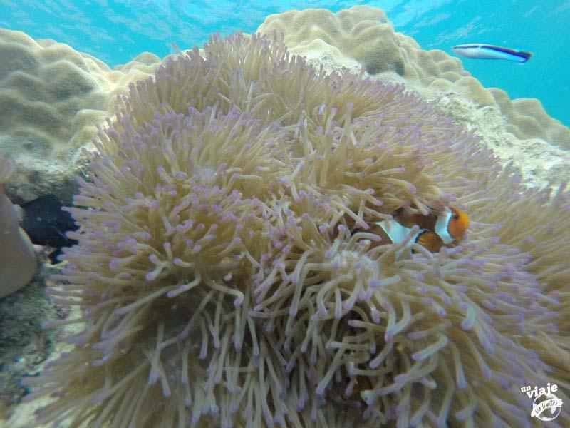 Buscando a Nemo en las Islas Perhentians.