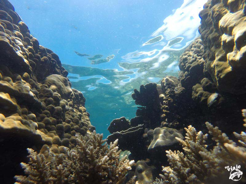 Arrecifes de coral de Malasia.