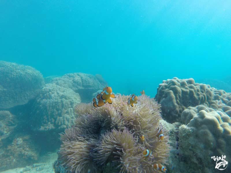 Buscando a Nemo en el paraíso de Malasia.