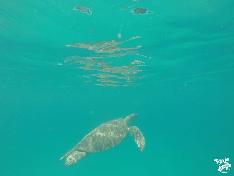 Tortuga en las Islas Perhentians de Malasia.