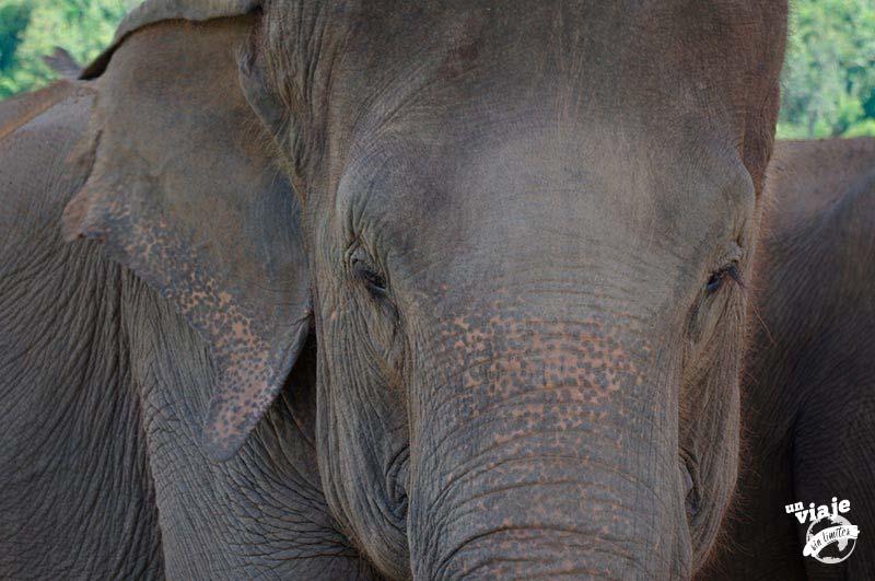 Día con elefantes en Tailandia