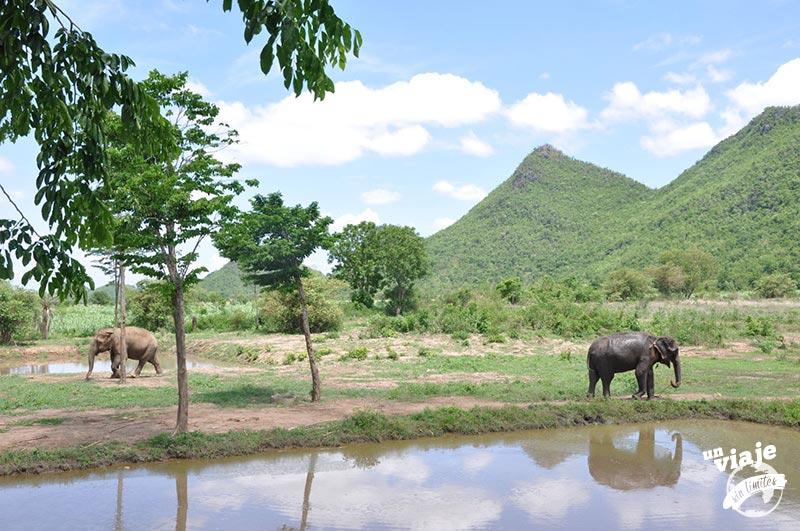 Elefantes viviendo libres en Tailandia
