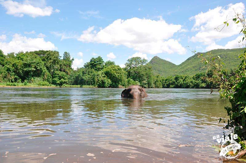 Elefante bañándose en el río, Tailandia.