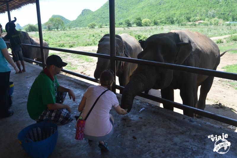 Alimentando elefantes en Tailandia