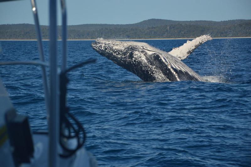 Nadando con ballenas en Australia