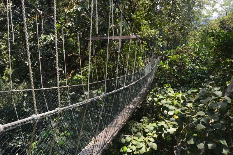 canopy, que hacer en Taman Negara, Malasia, selva