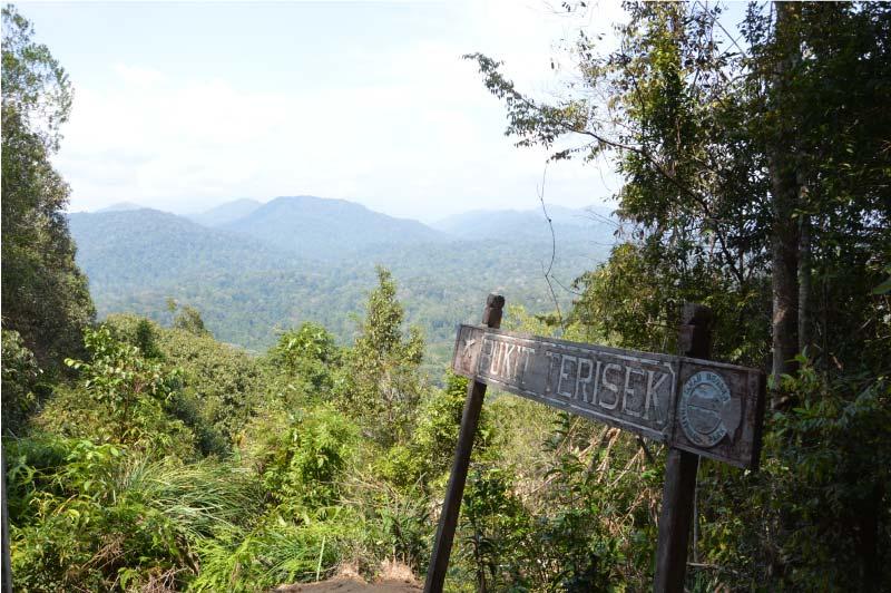 Bukit Terisek, Parqu Nacional Taman Negara, Malasia.